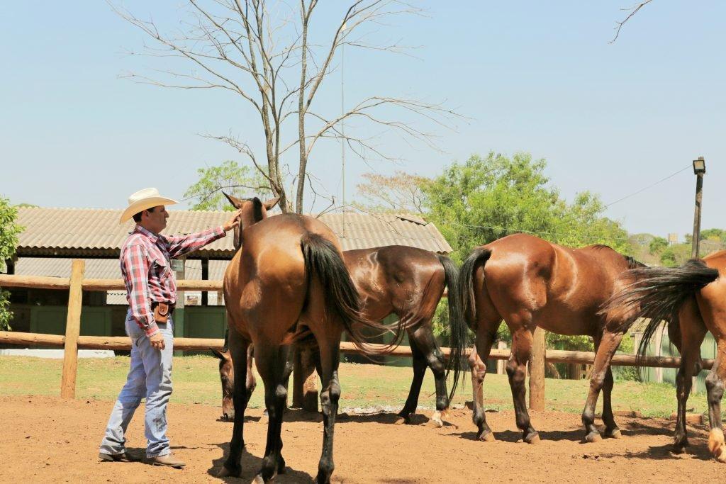 Quatro cavalos à direita e instrutor a esquerda interagindo com cavalo