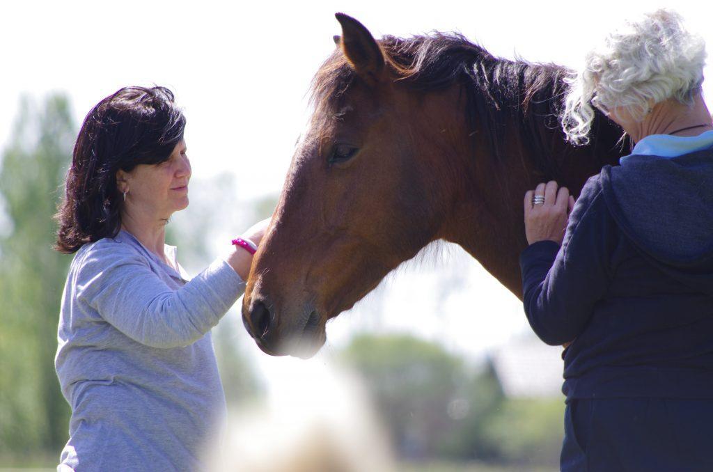 Duas integrantes interagindo com cavalo